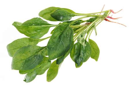 Spinazie met root geïsoleerd op witte achtergrond Stockfoto
