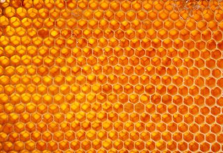 黄色のハニカム ワックス セル詳細テクスチャ背景