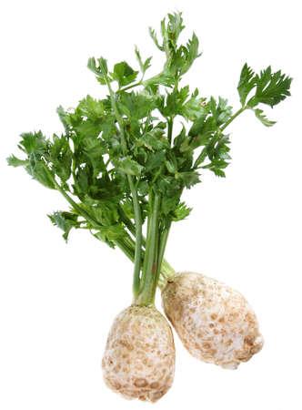 Selderij met root geïsoleerd op witte achtergrond Stockfoto