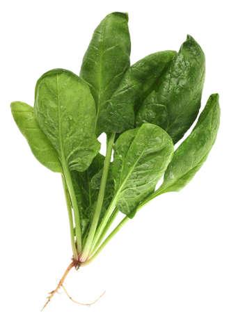 Spinazie met root geïsoleerd op witte achtergrond Stockfoto - 2851516
