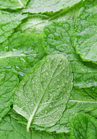 Spearmint green herb leaf closeup view background photo
