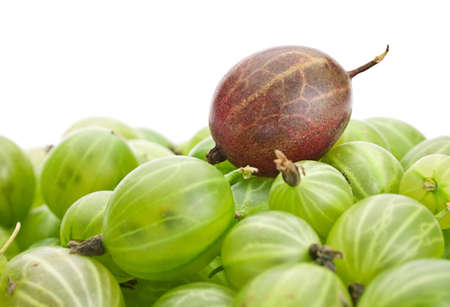 gooseberry: Green gooseberry fruit closeup isolated on white background