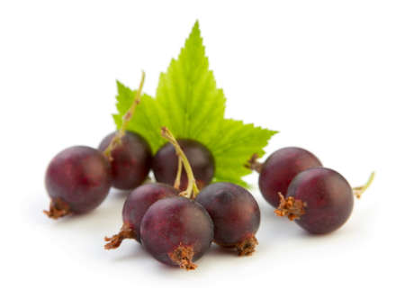 Josta hybrid gooseberry and black currant isolated on white