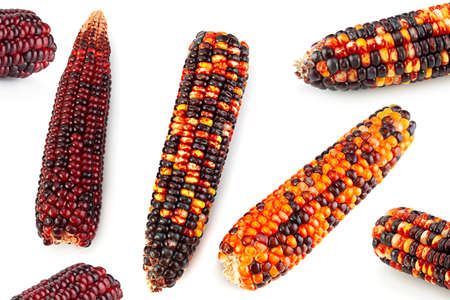 Decorative multicolor corn seeds closeup isolated on white