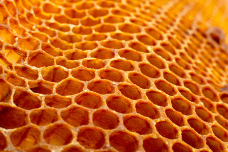 Yellow Honeycomb closeup texture detail horizontal Stockfoto
