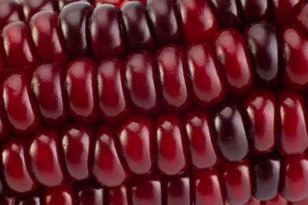 Decorative multicolor corn seeds closeup detail