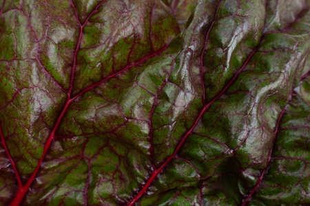 Chard leaf closeup isolated on white Stockfoto