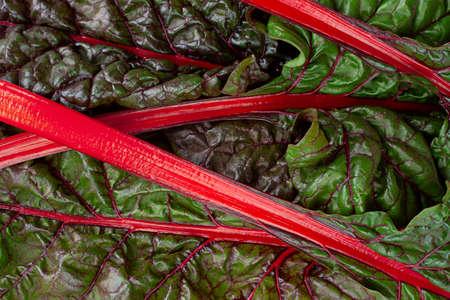 Chard fresh leaf and stem closeup
