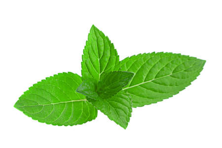 Mint herb leaf closeup isolated on white