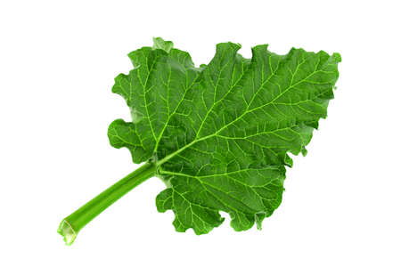 Rhubarb vegetable leaf isolated on white background