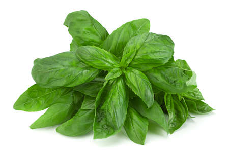 Green basil herb isolated on white background