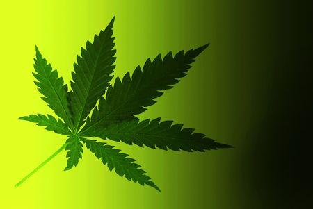 Hoja de marihuana Foto de archivo - 3746402