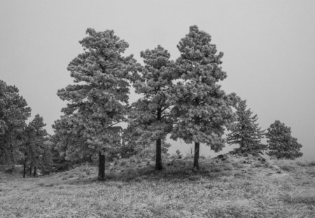 A dreary frozen morning in the foothils of the Front Range in Colorado.