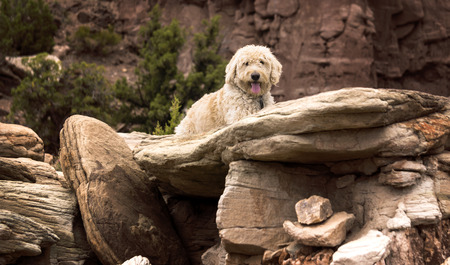 mesas: Teig hanging on some rocks in the desert country of the mesas near Grand Junction, Colorado Stock Photo