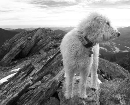 Teig auf dem Gipfel des Chief Mountain in der Front Range von Colorado. Standard-Bild - 51295037