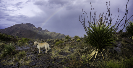 cary: Teig on the South Franklin Peak after a rain storm. This is the peak north of El Paso, Texas.