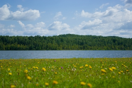 Flowered shore of lake on sunny day Stock Photo - 8518053