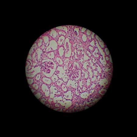 image through the microscope.  zoom x 40
