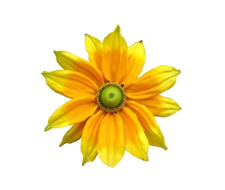 Dahlia amarillo solo, aislado en blanco Foto de archivo