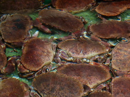 Alive crabs under water for sale at market