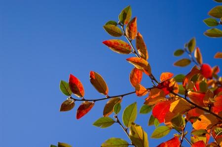 Hojas multicolores �rbol contra el cielo azul
