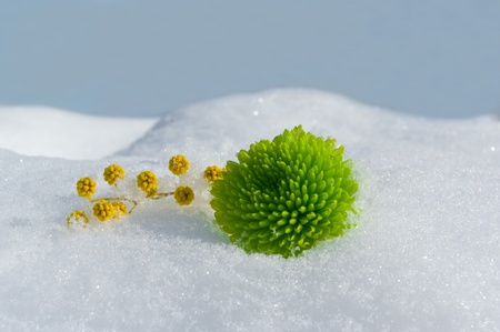Flores sobre la nieve