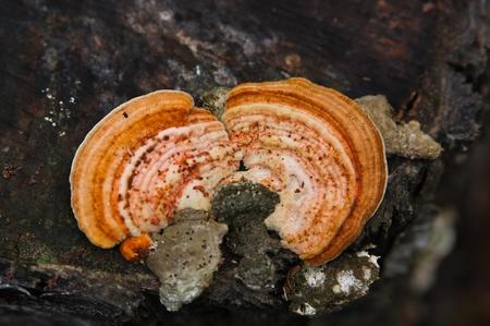 hongo de madera en el tronco del �rbol