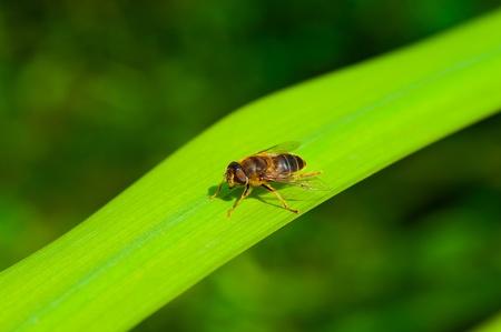 Volar como abeja
