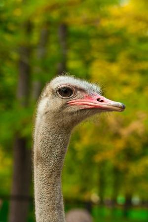 cerrar un disparo de una cabeza de avestruz
