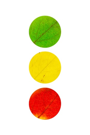 3 colored maple Leaves in the shape of traffic light isolated on white Stock Photo