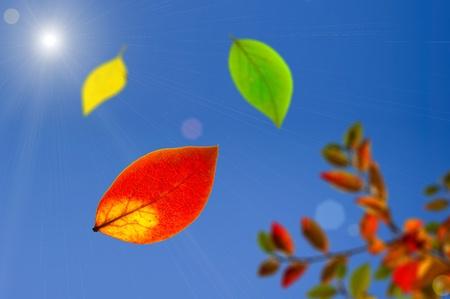 caen 3 colores oto�o hojas contra el cielo azul. Luz solar