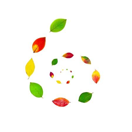 El oto�o de hojas multicolor en espiral sobre fondo blanco Foto de archivo