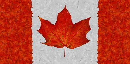 Canadian flag made up from red and white autumn maple leaves Stock Photo