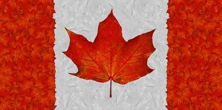 Deja de bandera canadiense de rojo y blanco oto�o Arce Foto de archivo