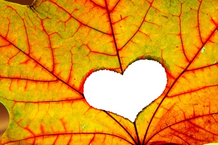 Autumn maple leaf with a hole in shape of heart Stock Photo