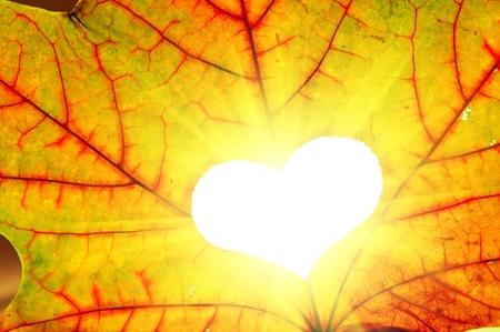 Hoja de arce oto�al con un agujero en forma de coraz�n. Luz solar
