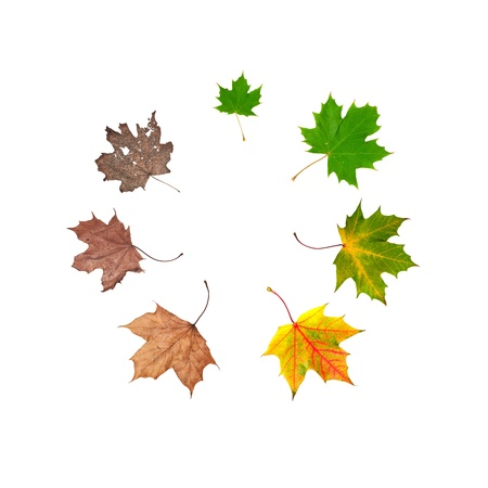 Different stages of life of a leaf symbolising the human life. Placed in circle, isolated on white Stock Photo