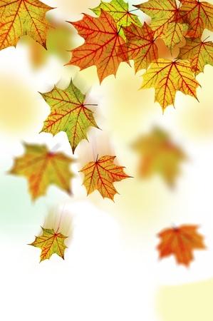 Ca�da de oto�o multicolores hojas de arce. Fondo de oto�o
