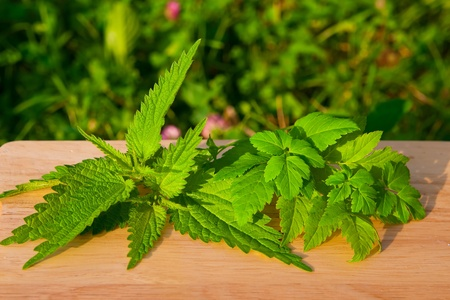 nettle with aise-weed on a light wooden board in the garden. selection for spring salad