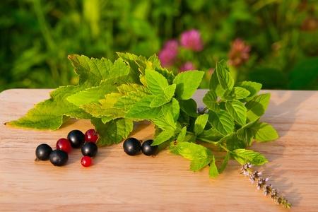 grosellas rojas y negro con verde y menta sobre un tablero de madera clara. selección de té de hierbas