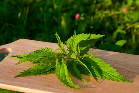 nettle on a light wooden board in the garden. selection for spring salad