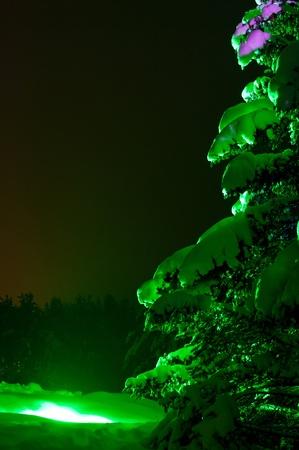 Abeto de nieve iluminado con luces coloful al aire libre en la noche Foto de archivo
