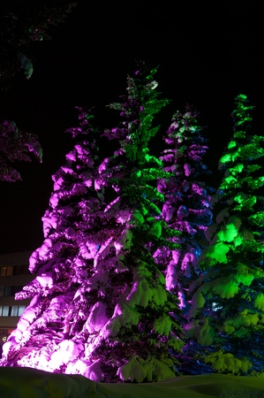 Fir-tree with snow enlightened with coloful lights outdoors at night photo