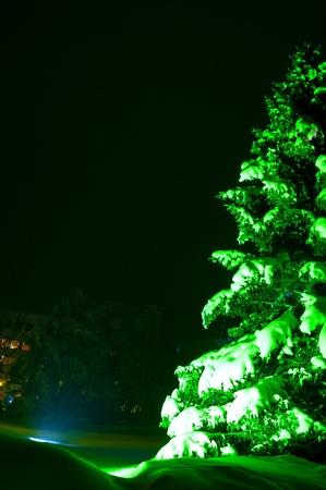 Abeto de nieve iluminado con luces de coloful aire libre en la noche Foto de archivo