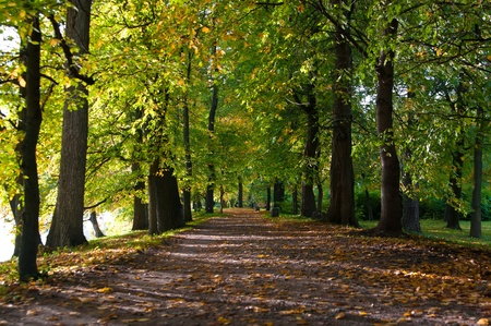 Beautiful autumn road with leaves in park photo