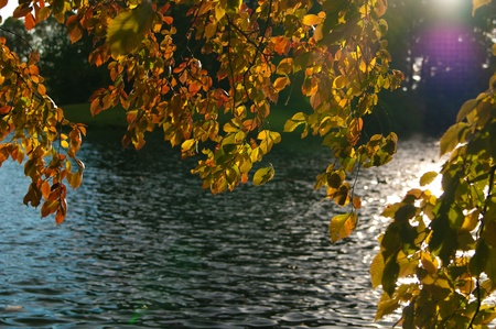 Hojas de otoño sobre el agua. Día soleado.