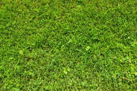 Una vista anterior sobre la hierba verde fresca