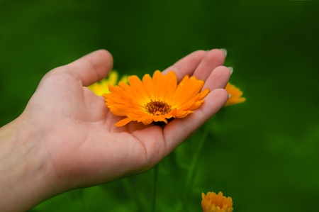 manos femeninas celebración de maravilla con el fondo de la hierba verde