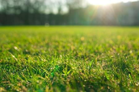 Césped verde fresco iluminado con sol de mañana Foto de archivo