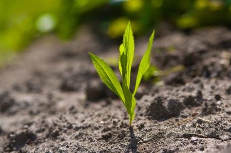 Joven planta que crece en un desierto de arena Foto de archivo